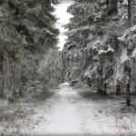 droga-krzyzowa-na-jawornice_2018_0521